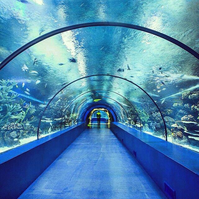 PG Fantastic Large Acrylic Aquarium Tank Tunnel