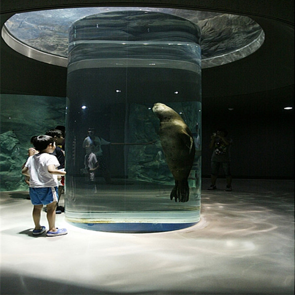 Sea Lion Acrylic Cylinder in Sea World