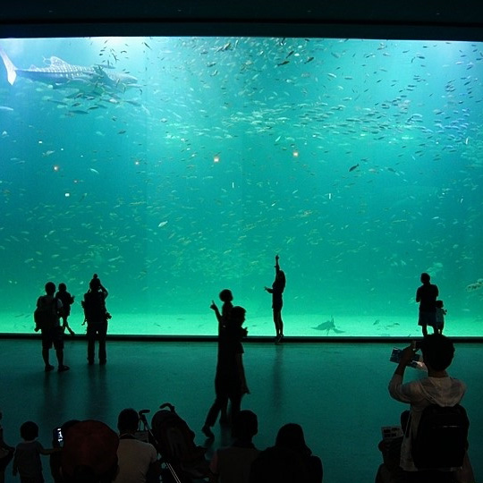 Sea World Shark Show Thick Acrylic Panel Aquarium